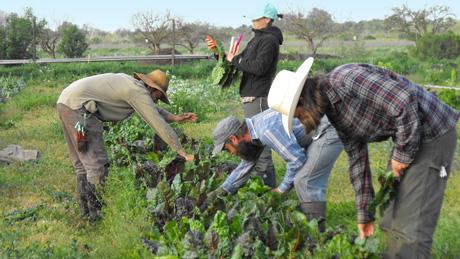 Farming soil born farms for Soil born farms