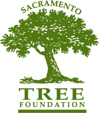 sac_tree_logo